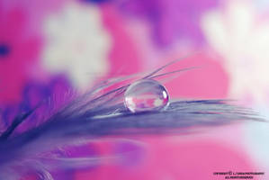 purple pink by lindahabiba