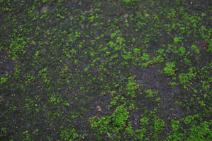 Moss Texture 04. by stock-basicality