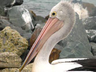 Sea Birds - Stock 04. by stock-basicality
