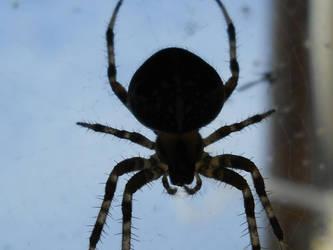 spider_x by SpecialSeason