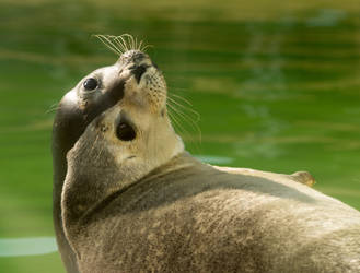 Seal by Parides