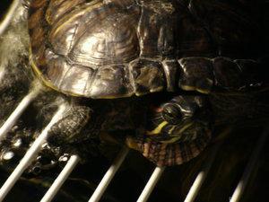 Turtlebold by Telebold