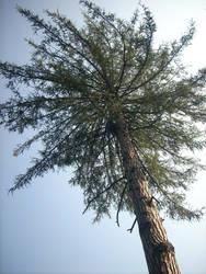 High Wind Tree by AcidBurnL9