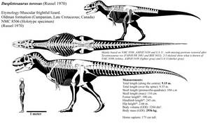 Daspletosaurus torosus skeletal reconstruction. by Franoys