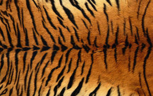 Tiger Fur by mirengraphics