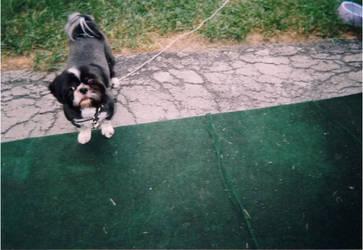 Doggin' the backyard by Itazuk