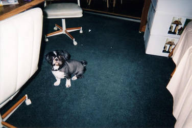 Whaddya want, pup? by Itazuk