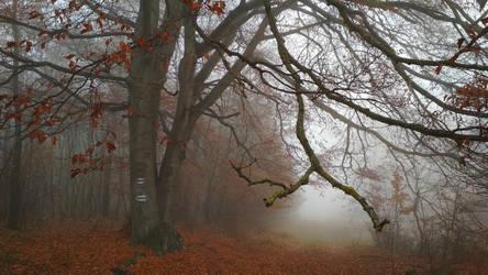 November by FuZoom