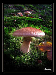 Boletinus cavipes by Smokey41