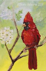 Cardinal Bird by Oksana007