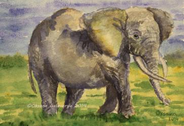 Watercolor and Ink #25 - Elephant by Oksana007