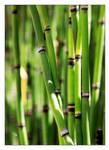 I Bambu You by TeaPhotography