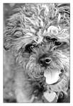 Athena, Goddess of Dogs by TeaPhotography