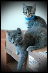 Two Shelter Cuties by TeaPhotography