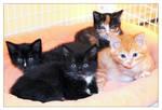 Season of the Kitten by TeaPhotography