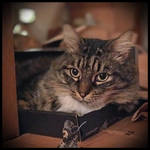 Jack in the Box by TeaPhotography