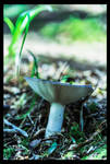 Flair of the Forest Floor by TeaPhotography