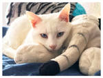 The Fingers and Toes of Paws by TeaPhotography