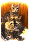 Totem Cats for You by TeaPhotography