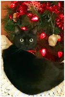 Aunika's 2nd Christmas by TeaPhotography
