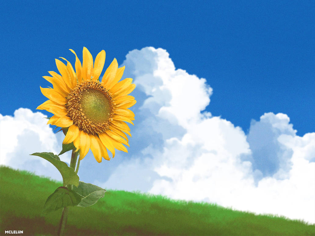sunflower by mclelun