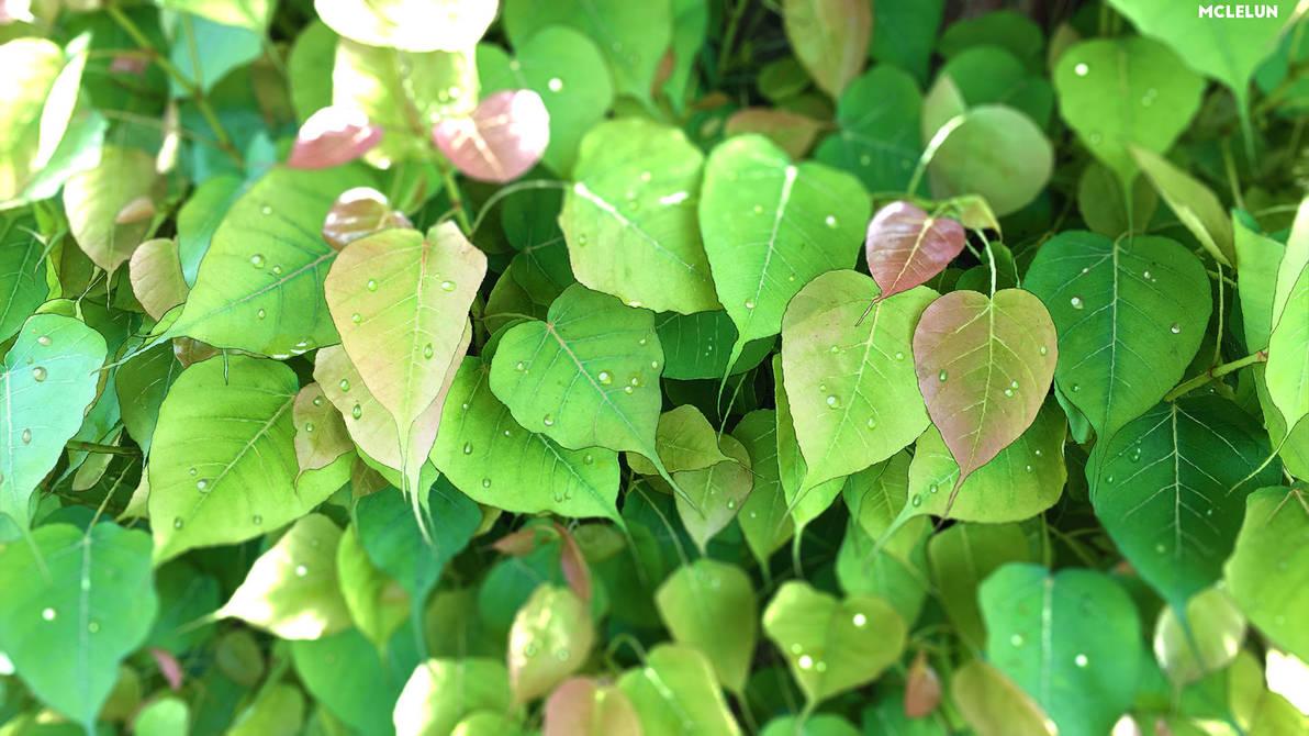 leaves by mclelun