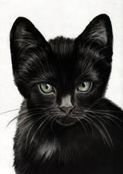 Back Kitten - New family member by art-it-art