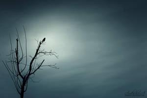 Spooky Night by ArDesHIr-a