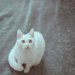 Amber Eyes by MarinaCoric