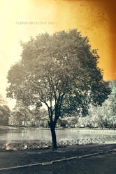 Infrared tree 1 by Alharaca