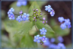 Brunnera Macrophylla by CaryAndFrankArts
