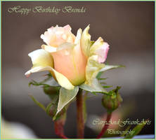 Happy Birthday Brenda by CaryAndFrankArts