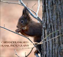 Squirrel by CaryAndFrankArts
