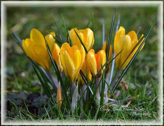 Spring by CaryAndFrankArts