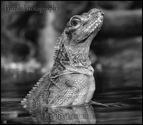 Black and White by CaryAndFrankArts
