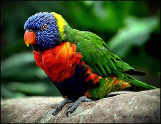 Multicolored by CaryAndFrankArts