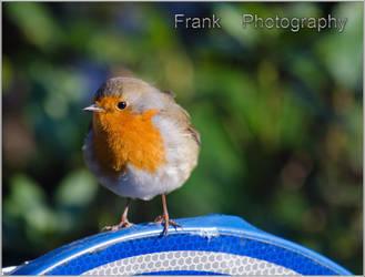 Robin by CaryAndFrankArts