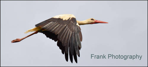 Stork by CaryAndFrankArts