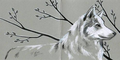 Wolf postcard by 3lda