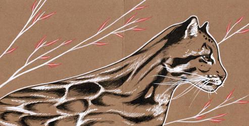 Clouded leopard postcard by 3lda