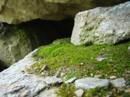 Moss Macro Stock 2 by Equide--Designs