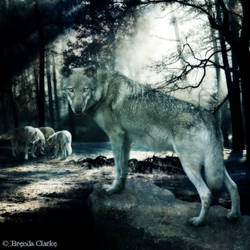 The Pack by Inadesign