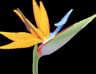 Orange Bird of Paradise - Strelitzia reginae by UmbraQuies