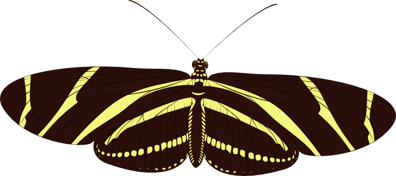 Zebra Longwing by UmbraQuies