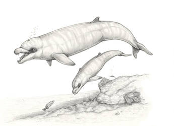 Boar-snouted dolphin by electreel