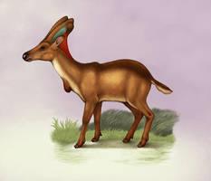 Flaghorns - Dermatoceratinae by electreel