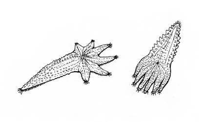 'Sea hands' by electreel