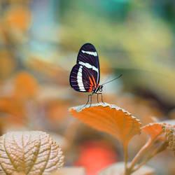 Butterfly Garden by LashelleValentine