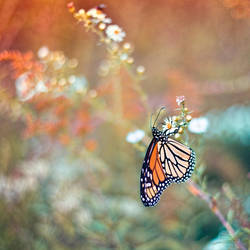 Butterfly Garden VI by LashelleValentine
