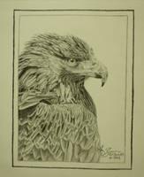 Golden Eagle Portrait by amzimme